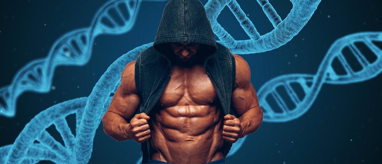 Avez-vous une bonne génétique pour la musculation ?
