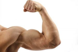 musculation biceps